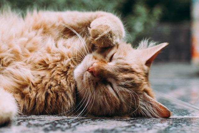 help an overweight cat