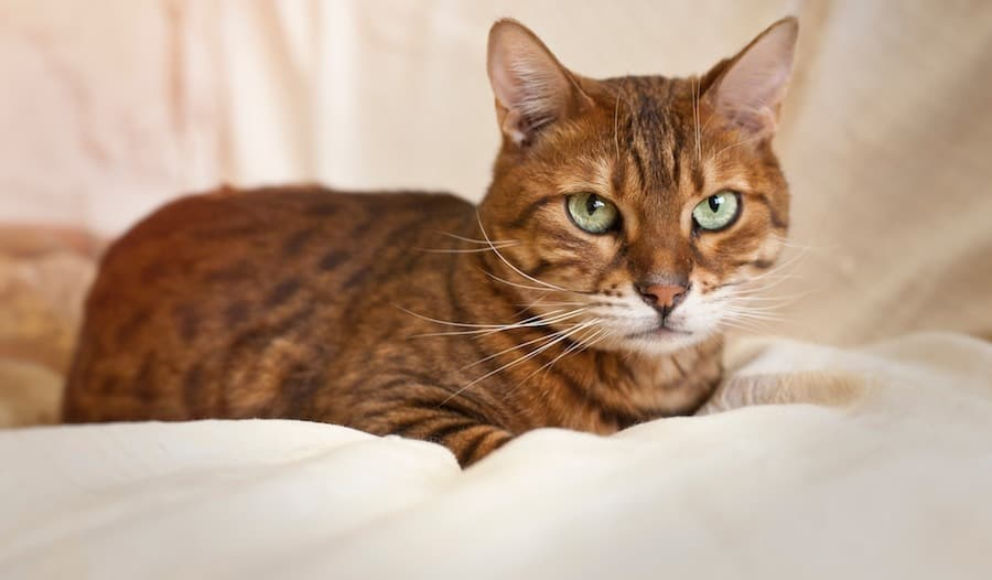 How you can help cats with a sensitive stomach
