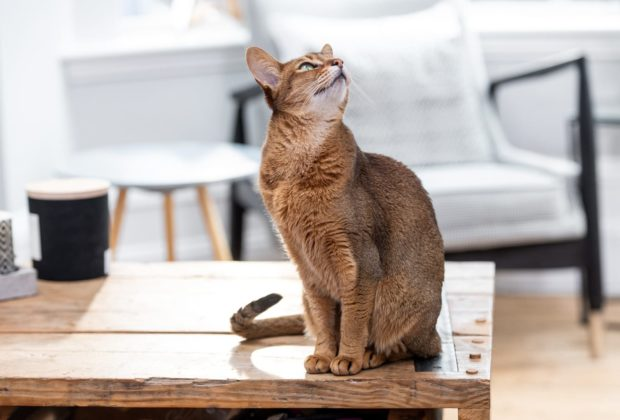 The importance of cat nutrition for keeping a shiny coat