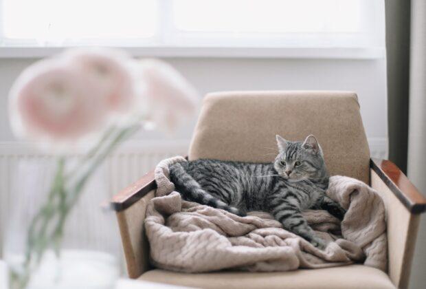 How to keep your indoor cat healthy