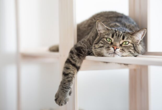 How to encourage a lazy cat to play & be active