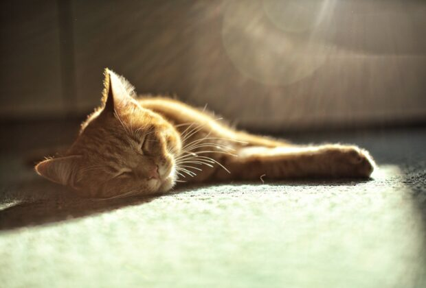 The signs your cat may have heatstroke (and how to prevent it)